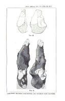 Sidan 384